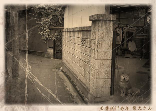 Img_iphone1199_shibainu