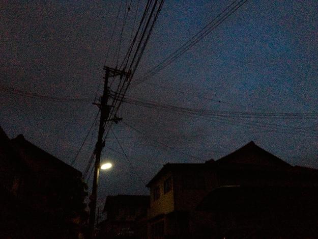 Simg_iphone1356_shibainu