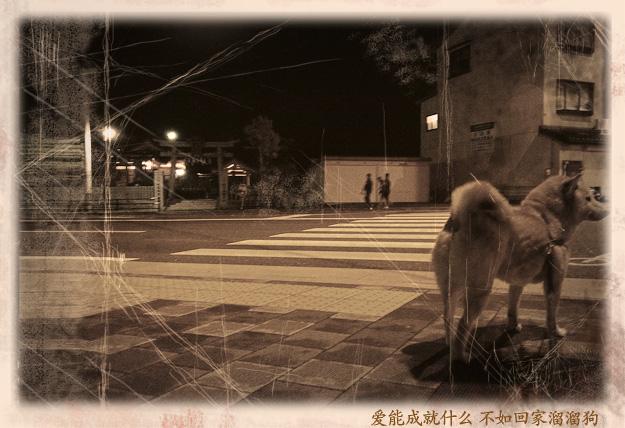 Simg_iphone1886_shibainu