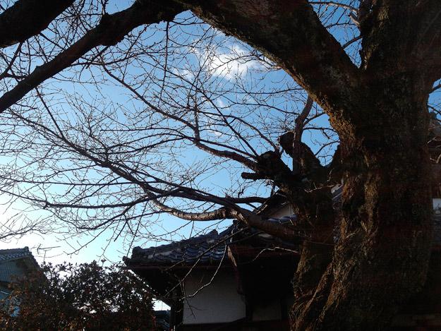 Simg_iphone1891_shibainu
