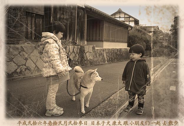 Simg_iphone2068_shibainu
