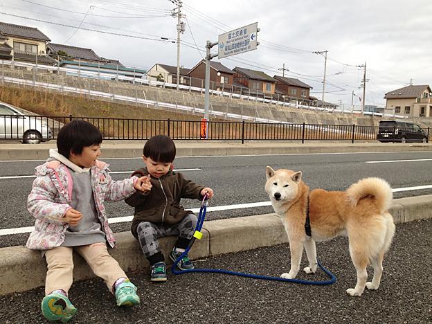 Simg_iphone2088_shibainu