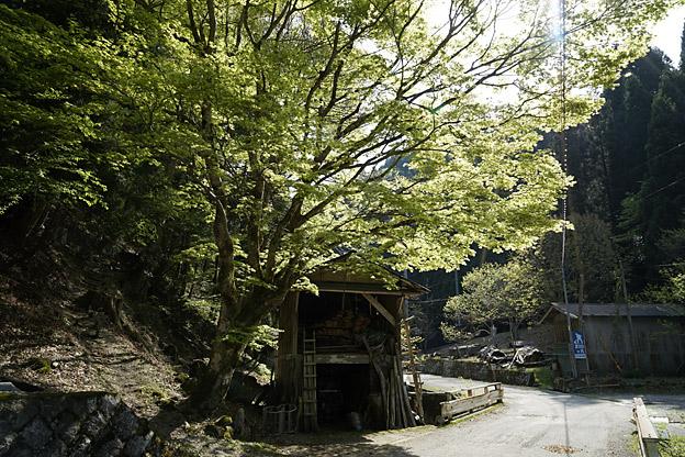 鳥取県八頭郡智頭町板井原