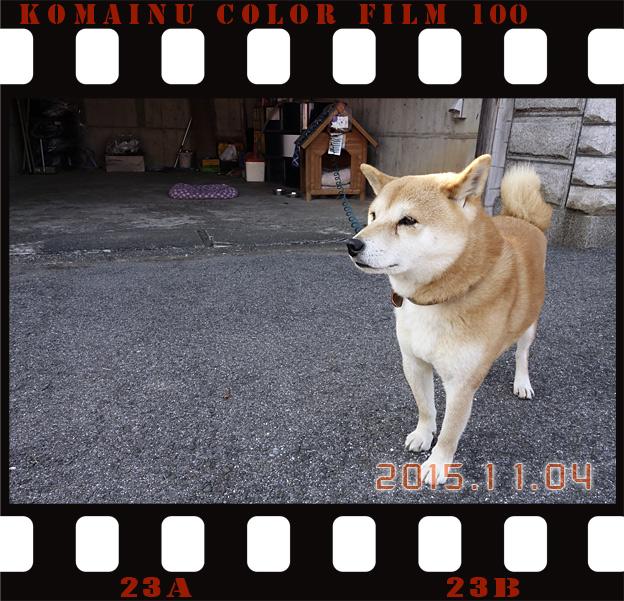 Simg_iphone3064512_shibainu
