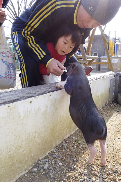 Simg_iphone3064681_pig