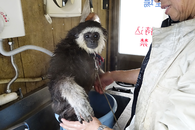 福知山市動物園 桃太郎
