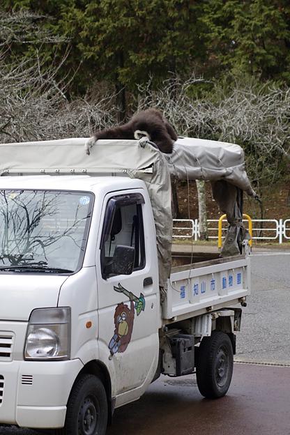 福知山市動物園 ももた 桃太郎