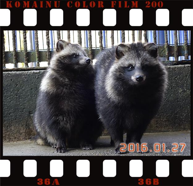 Simg_iphone3064985_racoon