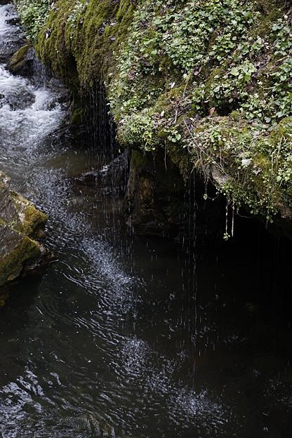 神庭の滝のニホンザル