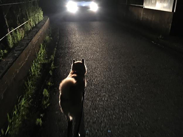 犬のさんぽ、夜歩く