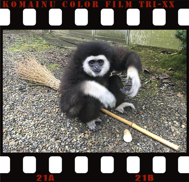 福知山市動物園のももた