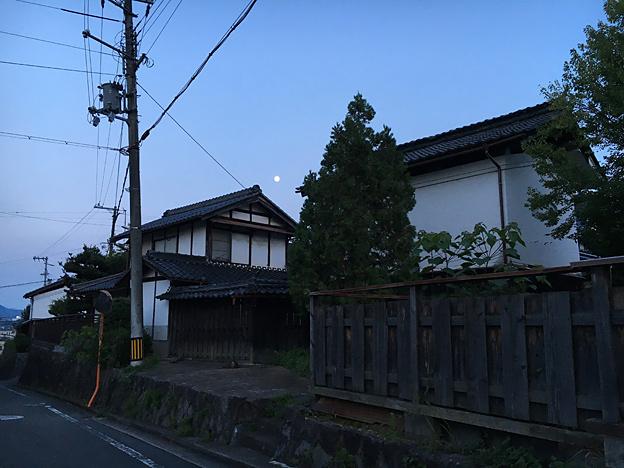 0011_shiba