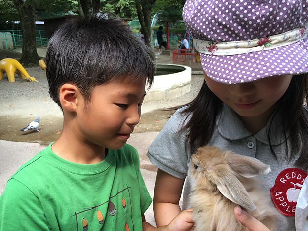 0044_rabbit