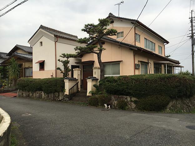 0158_shibainu_6