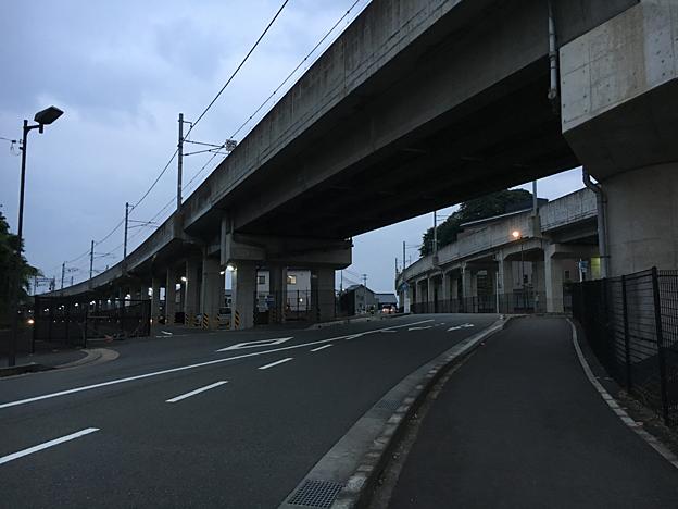 0162_shibainu_6