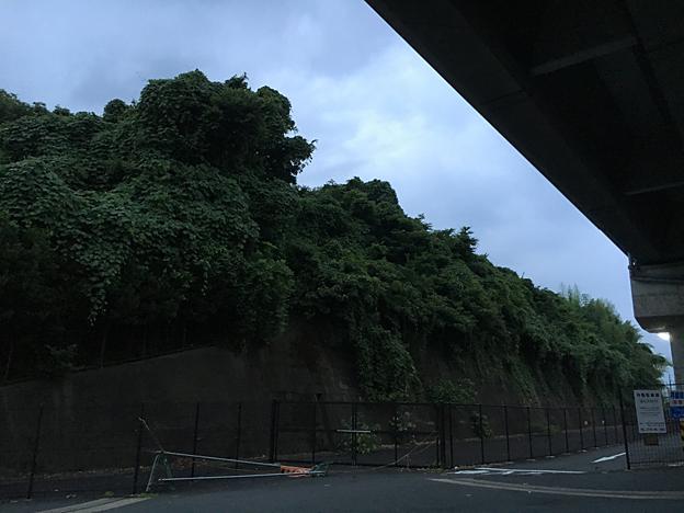 0163_shibainu_6