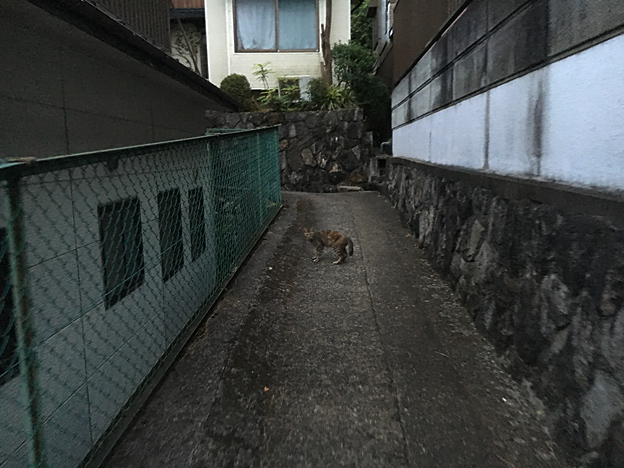 0164_shibainu_6