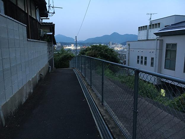 0165_shibainu_6