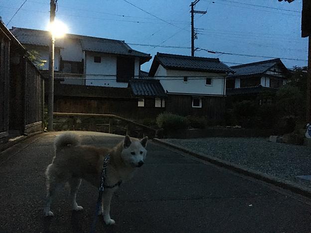 0166_shibainu_7