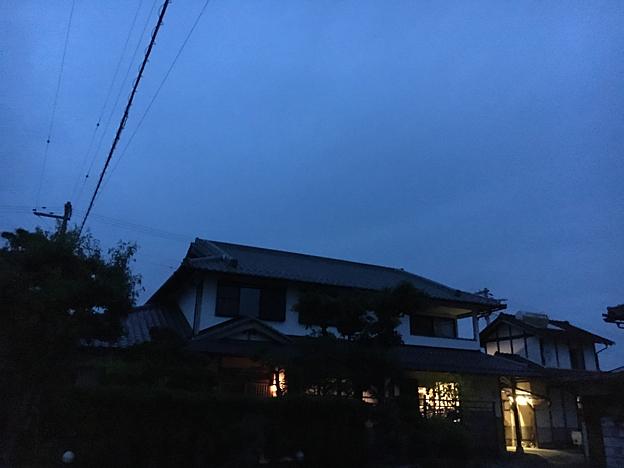 0170_shibainu_7