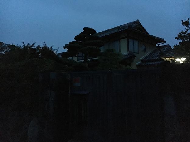 0171_shibainu_7