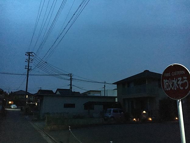 0172_shibainu_7