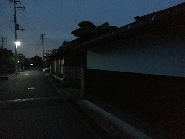 0174_shibainu_7