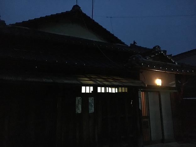 0175_shibainu_7
