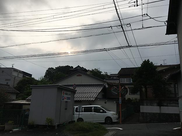 0181_shibainu_9