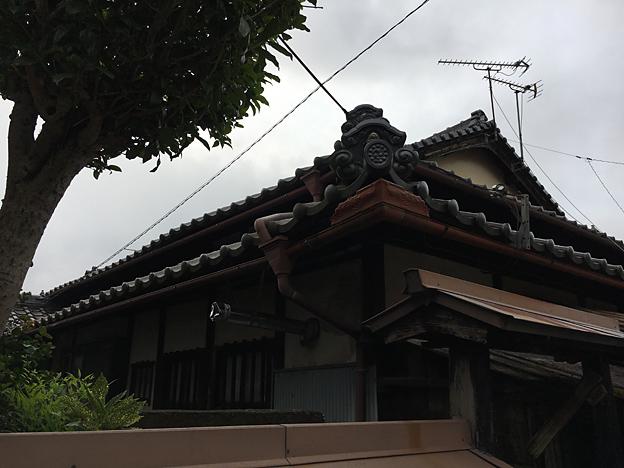 0184_shibainu_9