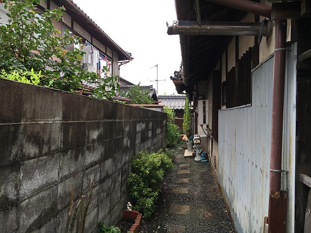 0185_shibainu_9
