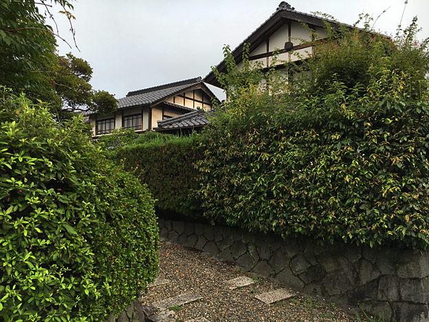 0189_shibainu_9