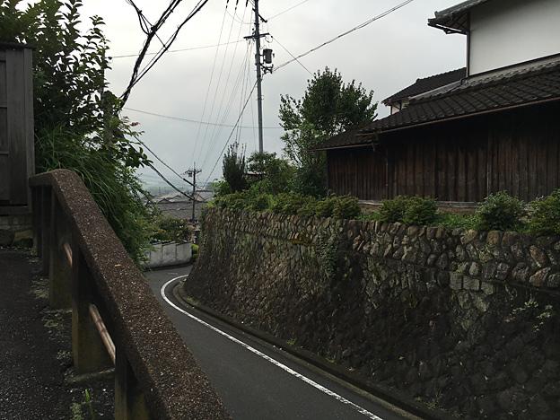 0192_shibainu_9