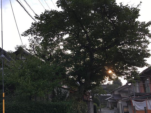 0195_shibainu_0