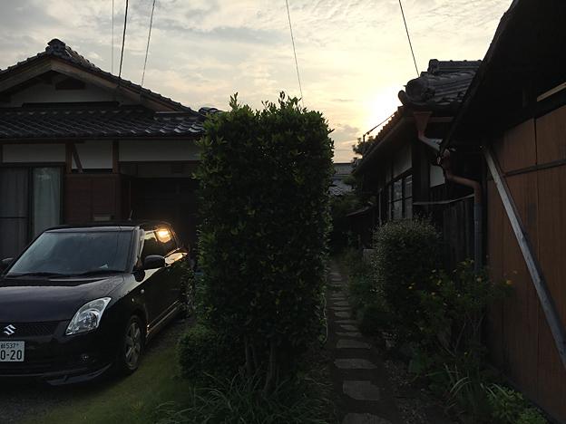 0197_shibainu_0