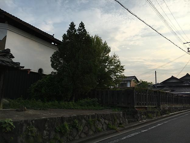 0198_shibainu_0