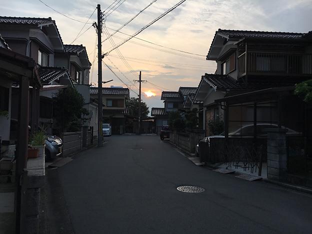 0217_shibainu_0