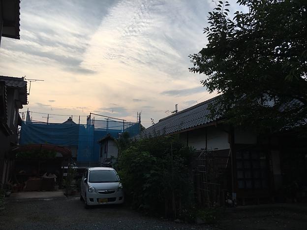 0220_shibainu_0