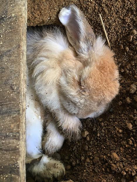0061_rabbit