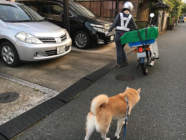 0222_shibainu_1