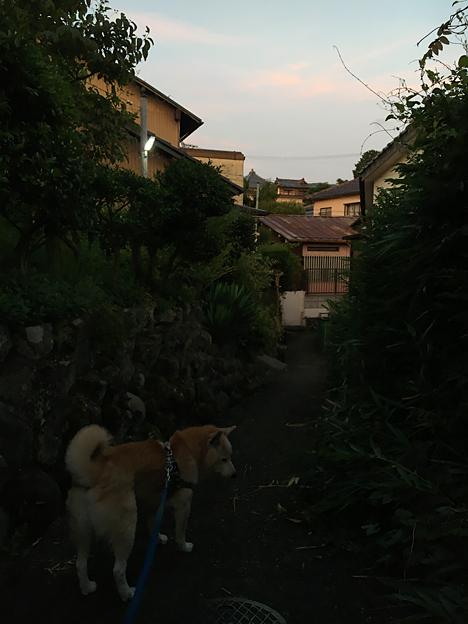 0228_shibainu_1