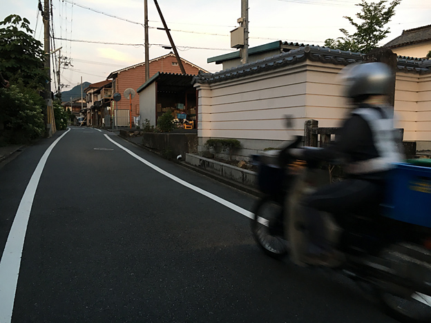 0232_shibainu_1