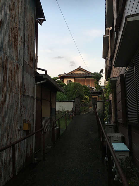0233_shibainu_1