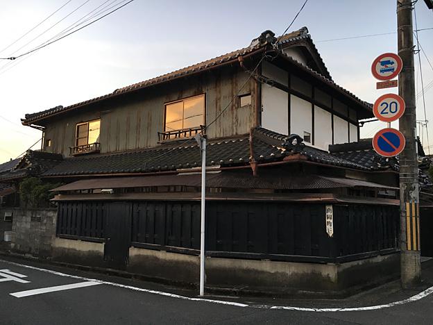 0235_shibainu_1