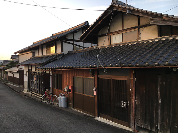 0239_shibainu_1