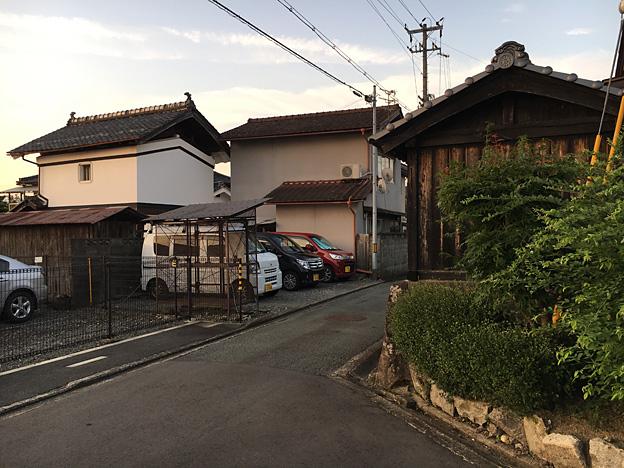 0240_shibainu_1