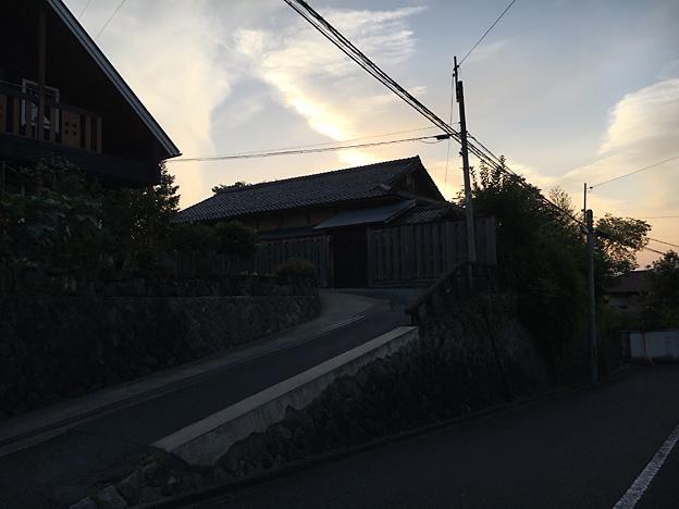 0241_shibainu_1