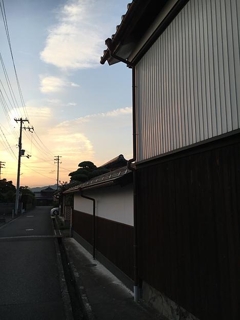 0243_shibainu_1_2
