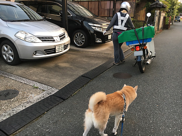 0245_shibainu_1