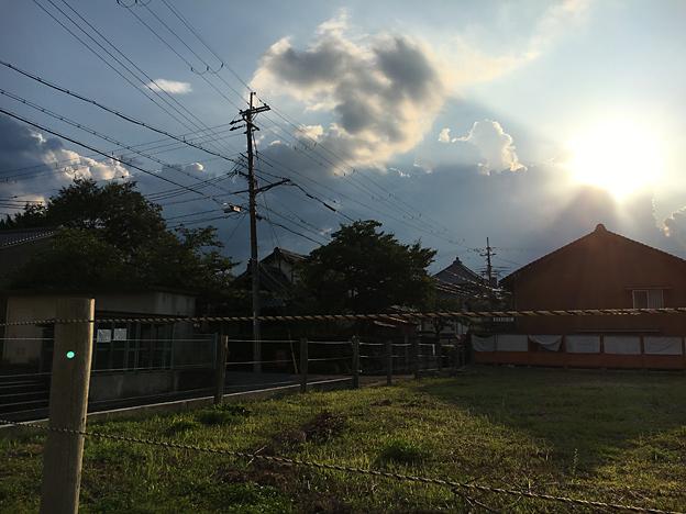 0347_shibainu_3